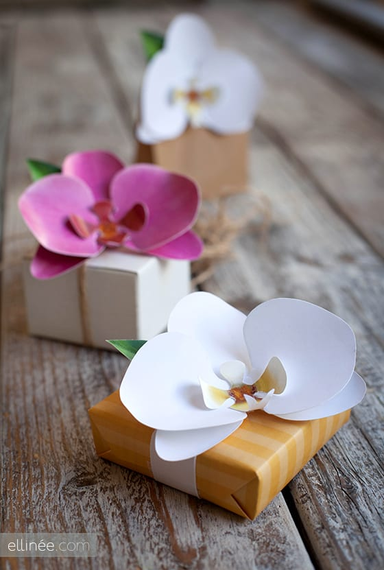 paper flower orchids