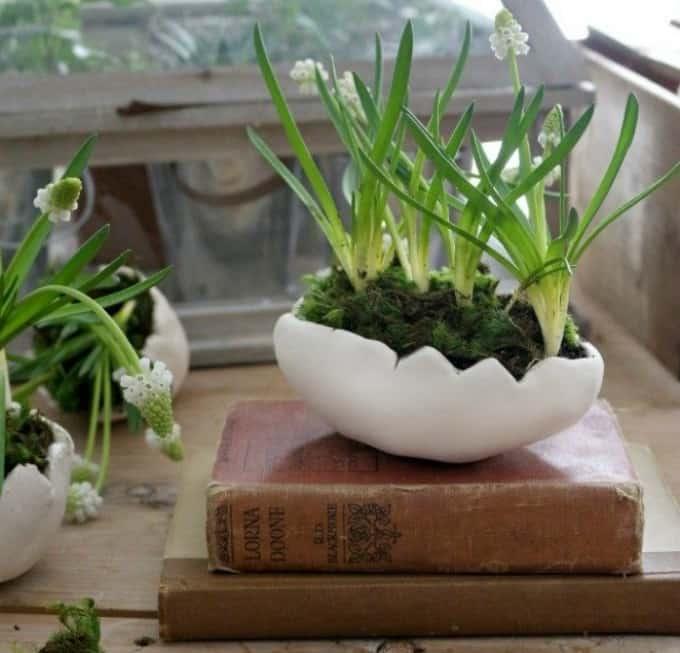 clay egg plant pots