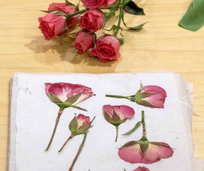 Pressed Flower Tutorial - We compiled a list of 39 other DIY pressed flower ideas for you to make | Coolcrafts.com