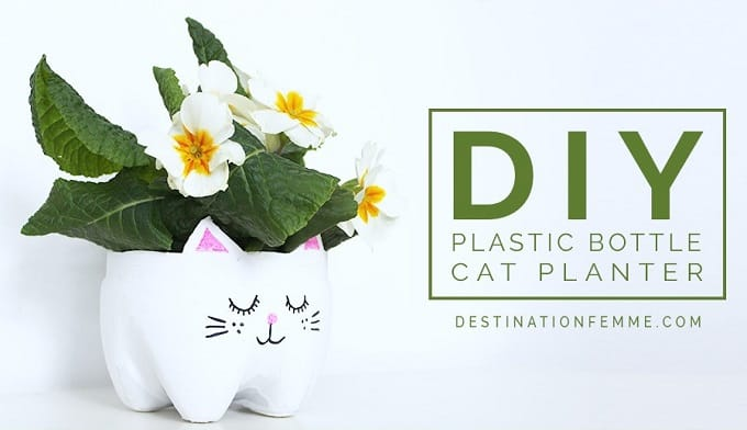 DIY kitty planter