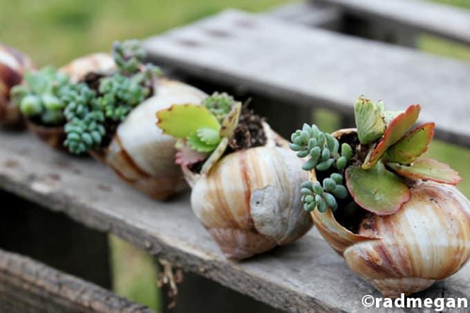 DIY shell planters