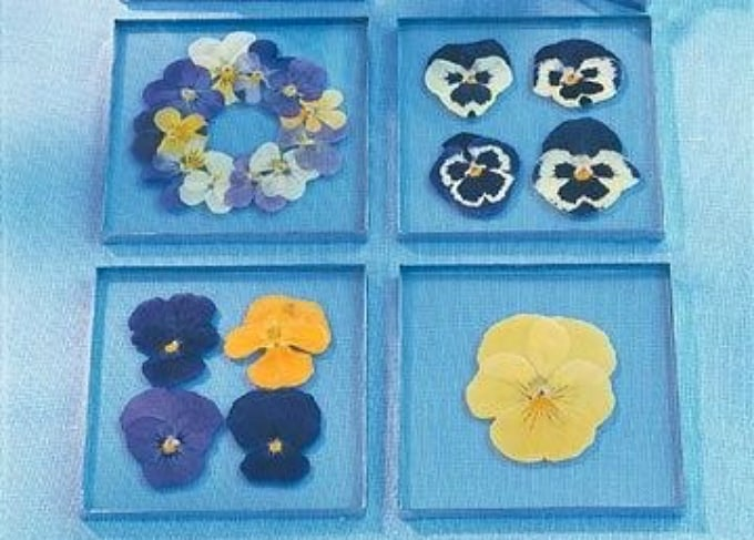 pansy coasters