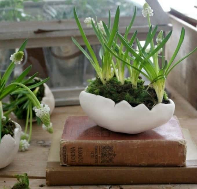 clay egg plant pots
