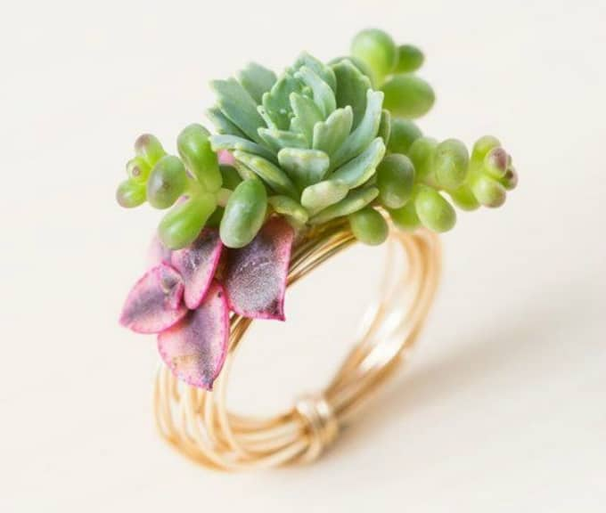 succulent earrings and ring
