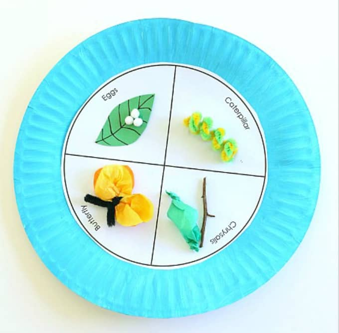 butterfly life-cycle craft