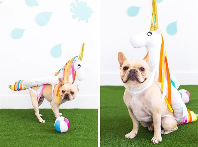 DIY unicorn pool float dog costume