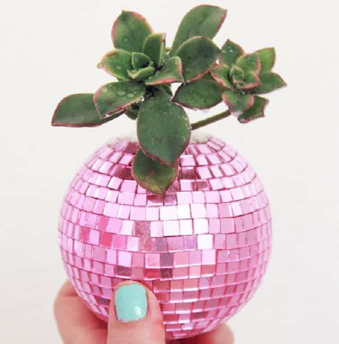 DIY disco ball succulent